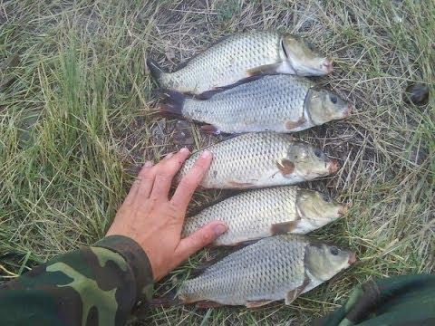 секреты рыбалки ловля на донку осень РСН _ Secrets fishing catching on donk