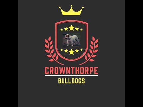 Bulldog kennels, wooden floor update, kennel build.
