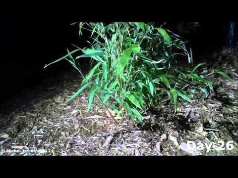 how to get 60 harvest sprites fast
