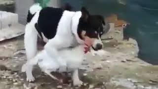 صدق او لا تصدق كلب يمارس الجنس مع دجاجة A dog having sex with a hen