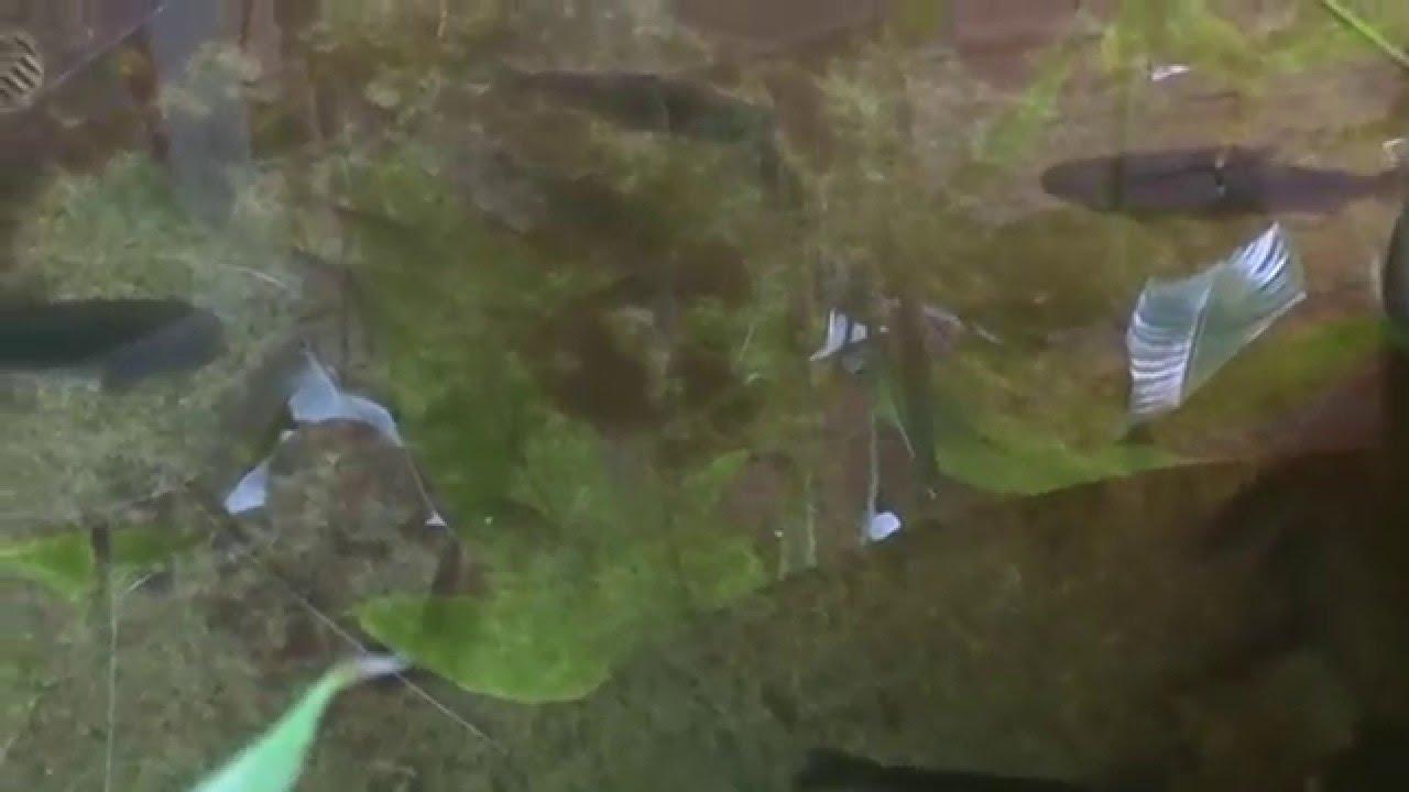 Laboratorio natura analitica ucayali peces youtube for Pileta con peces