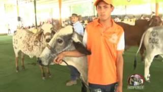 Perfil Agropecuario Domingo 14 Mayo XLII Feria del Ganado Cebú Valencia Edo Carabobo Parte (II)