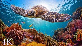 11 часов из 4K Turtle Paradise - расслабляющий фильм о подводной природе + музыка для медитации screenshot 1