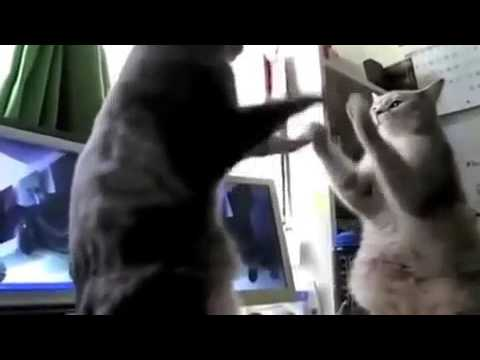 Backe backe kuchen katzen sprecher