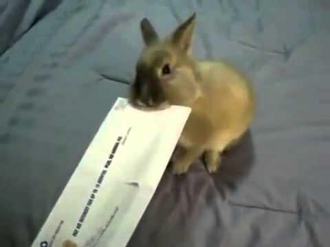 Как открыть конверт кроликом
