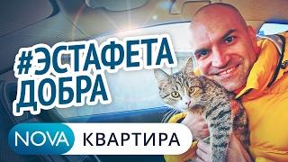 #ЭстафетаДобра . НоваКвартира помогает приюту животных | Благотворительность животным [НоваКвартира]