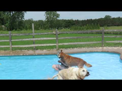 Buddy Learns to Swim!