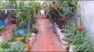 Agriculture In Cambodia | Khmer Agriculture | Grow Plan On The House Roof