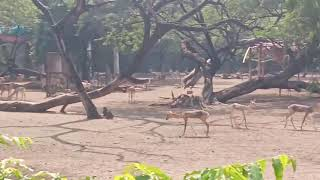 FORGET CATS! Funny KIDS vs ZOO ANIMALS are WAY FUNNIER! - TRY NOT TO LAUGH Delhil Zoo india