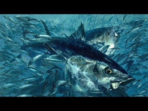 Fishing Waihau Bay NZ. Bluefin Tuna 2017 Part 2 !!