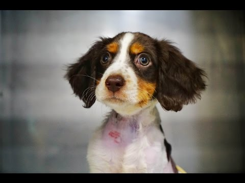 THE MOST AMAZING DOG RESCUE VIDEO: RICKY