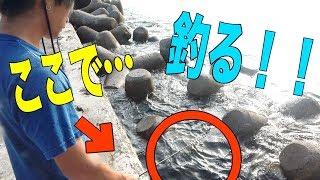 マホトちゃん、サグワちゃん、へきトラちゃんとの思い出の地に賭ける…[100均キャンプ対決 pt3]