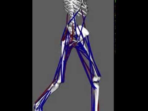 Walking Gait System