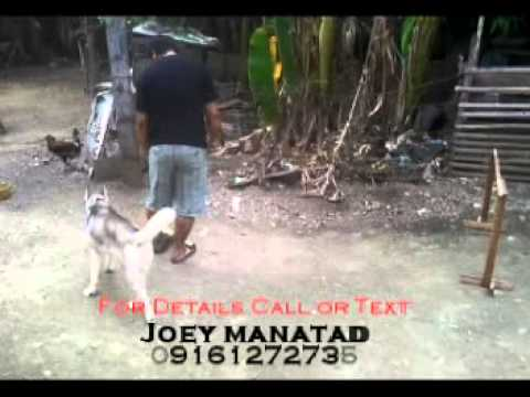 Joey manatad Dog trainer commercial
