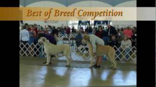 Trinity Valley Kennel Club - Dallas, Tx 12-05-09