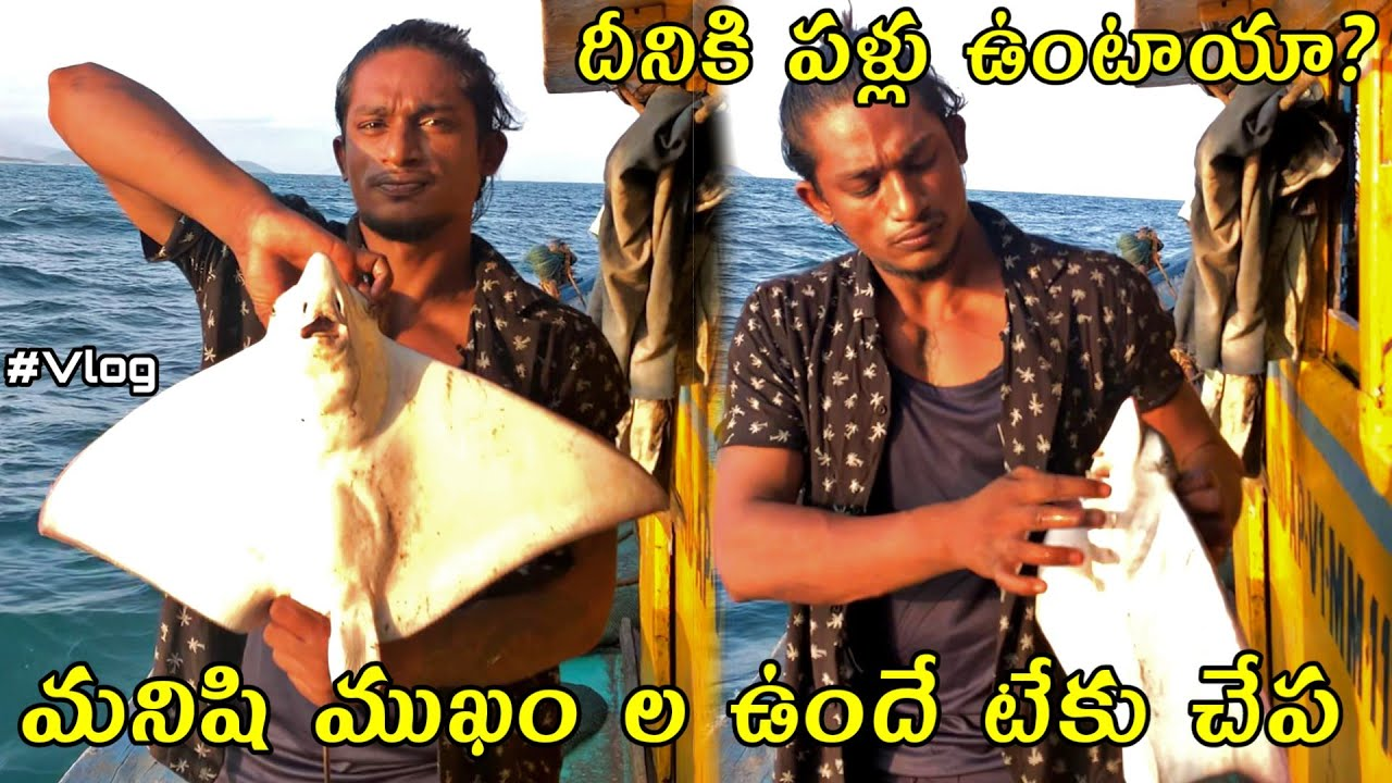 Local boi Nani   Stingray fish Human faced   Puffers and Frogfishes   Telugu Vlogs   Vizag Vlogs