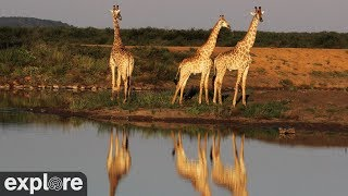 On the Northern border of South Africa and Botswana lies a beautiful area known as the Groot Marico, named after the Marico River. This spectacular setting ...
