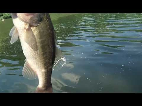 Largemouth Bass Fishing in Mississippi