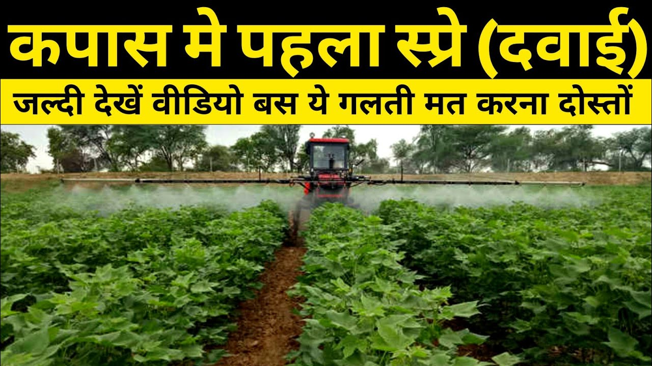 Cotton 1st Insecticide Spray | कपास में पहला स्प्रे | NPK 19-19-19, Roko fungicides, advance agri