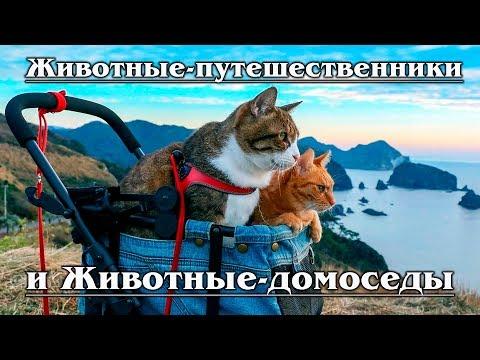 Животные-путешественники и Животные-домоседы | АУДИОКНИГИ