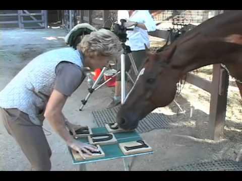 Con ngựa biết đếm benxekhach.com