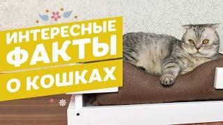 Топ интересных фактов о кошках