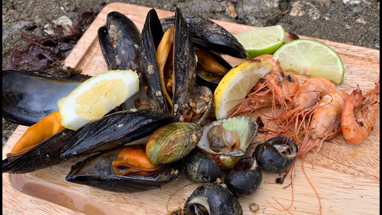 Coastal foraging, Ireland. Mussel, Oysters , Winkles