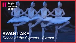 Swan Lake: Dance of the Cygnets | English National Ballet