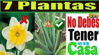 Cuidado! Nunca tengas ninguna de estas 7 Plantas dentro de tu hogar! Mira porque