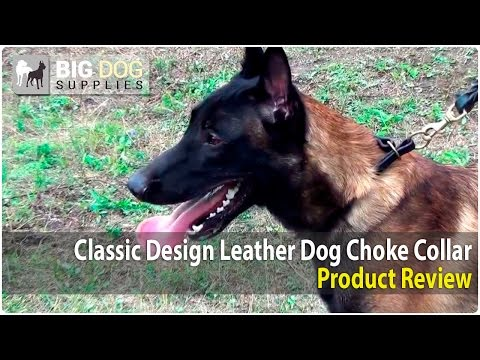 Belgian Malinois, Labrador Retriever and Dalmatian Wearing Pro Leather Choke Collar