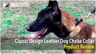 Belgian Malinois, Labrador Retriever And Dalmatian Wearing Pro Leather Choke Collar