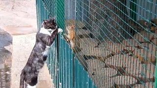 Дружба кошки и белки. Поселок Васильево