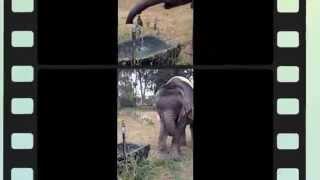 Elephant Lessons