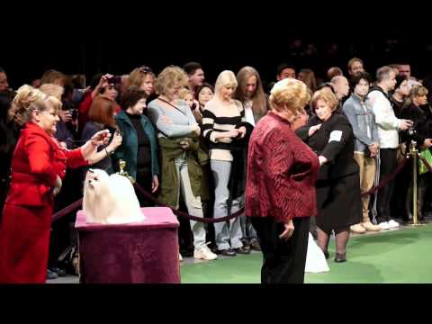 Westminster Dog Show 2012: Day 1 Maltese Silky Terrier Charles Spaniel (Toy Group)