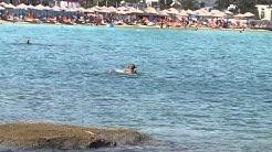 колко е чисто Егейско море 1