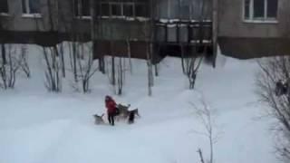 Человек спас девушку от собак.flv