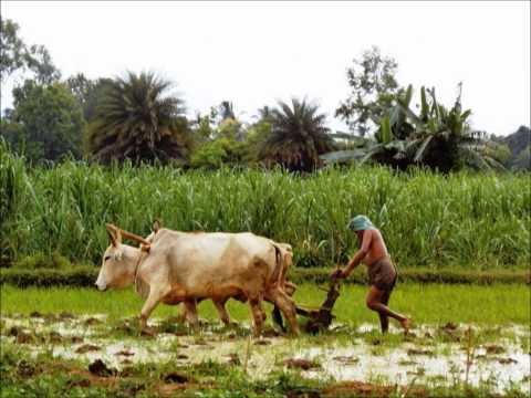 Renaissance & Retribution - Kandhamal, Odisha Part 2