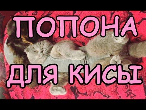 Как сделать попону для кошки после стерилизации своими руками