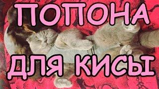 Попона для кошки из носка или чулка своими руками