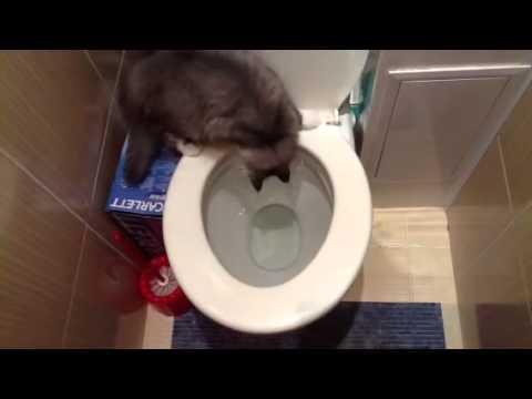Черная кошка, белый кот 1998 смотреть онлайн или скачать