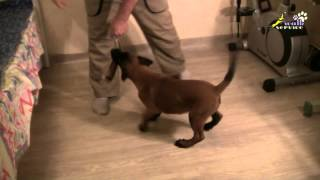 Dog Training | How To Play With A Puppy Properly