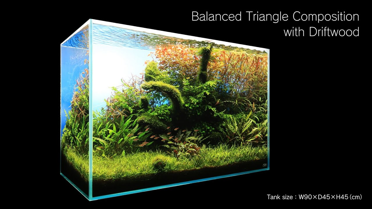 Adaview 90cm Aquarium Layout Triangle Composition With Driftwood Youtube