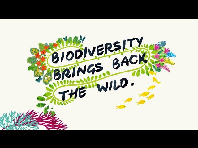 SUGi — Bring Back the Wild!
