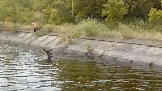 Спасатели помогли лосихе выбраться из канала