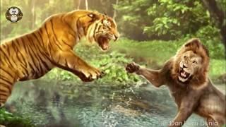 Raja Savana VS Raja Hutan, siapa pemenangnya??
