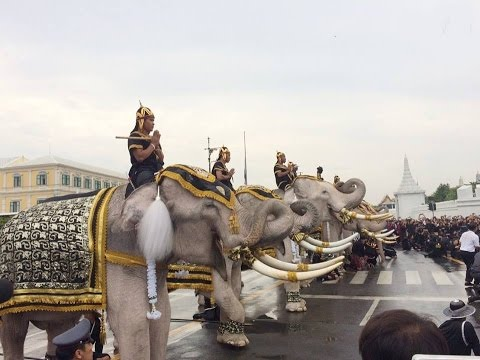 Elephants to pay respects to King Bhumibol at Grand Palace Thailand