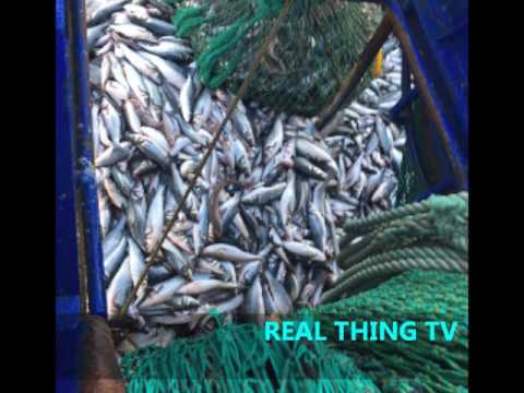 SHOCK WASTE Fishing Laws Lead To TONNES Of Fish Dumped Off