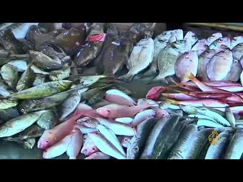 هذا الصباح- الأسماك المعلبة بين الفوائد والمحاذير  - نشر قبل 1 ساعة