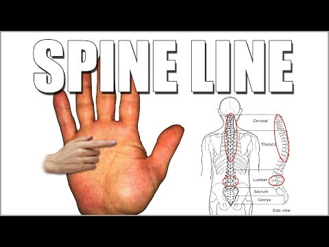 SPINE LINE Male Palm Reading | Palmistry #177