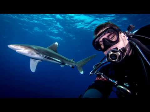 Shark selfie - Oceanic Whitetip in the Red Sea